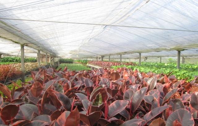 通年人気のミニ観葉植物たちが勢ぞろい