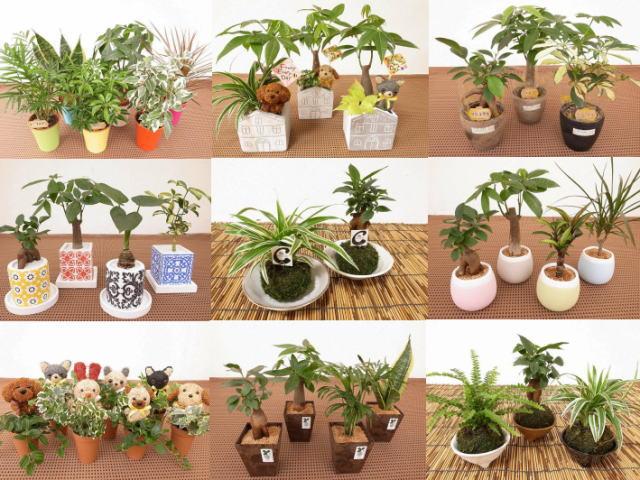 可愛らしい柄やオシャレな柄の陶器鉢 モダンなデザインの鉢など季節により内容が異なるミニ観葉植物をセットにして販売